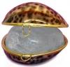 Кристалл свежести ТИГРОВАЯ РАКОВИНА в тигровой тихоокеанской раковине и пакете
