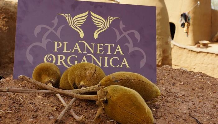 Cocoa-Ghana-Planeta-Organica-2-700x400.jpg
